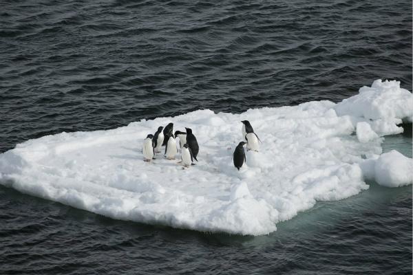 2. 南极企鹅_meitu_2.jpg
