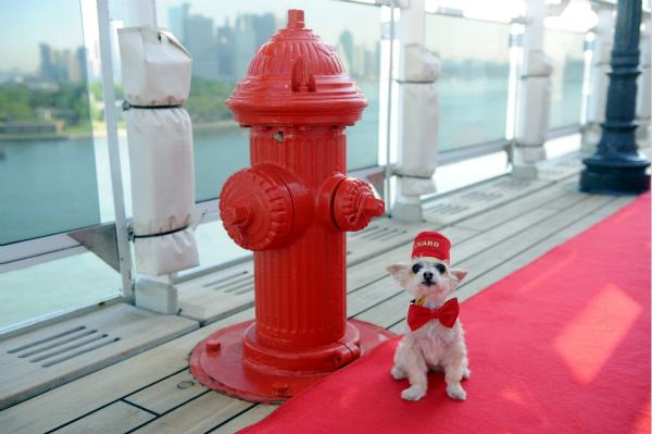 跨大西洋航次上的海上犬舍_meitu_1.jpg