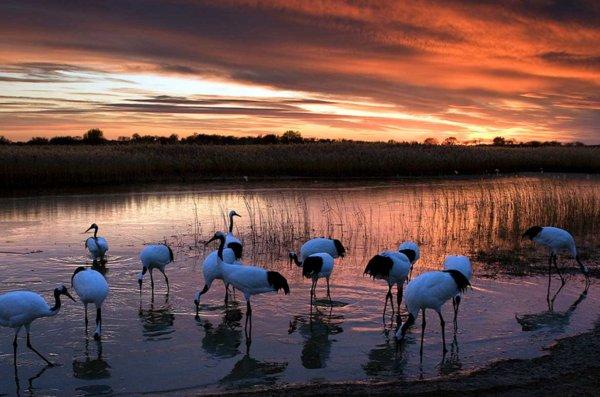 向海,国家级自然保护区