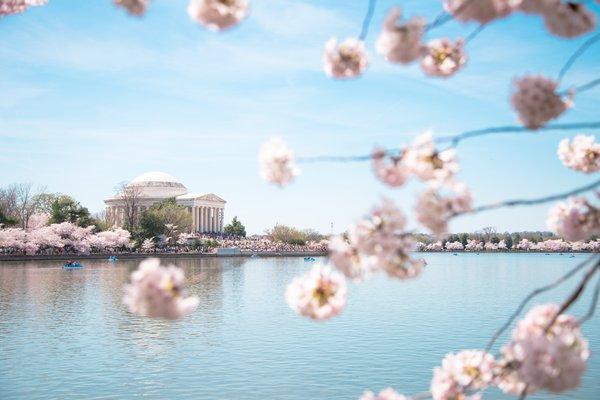 華盛頓特區國家櫻花節