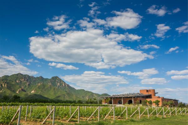 于云上酒庄体验葡萄酒酿造的乐趣,还原在红酒国度——法国的真实体验_meitu_1.jpg