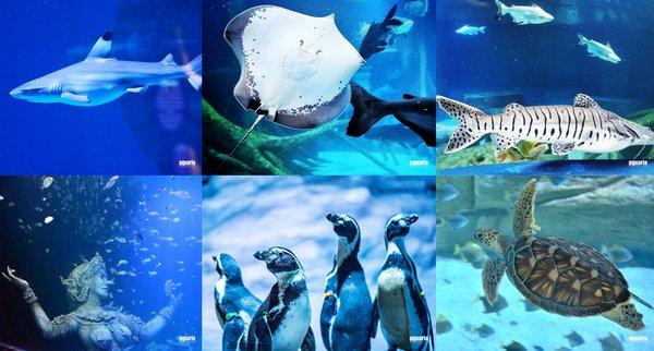 """普吉Aquaria水族馆""""海洋的神话和传说"""""""