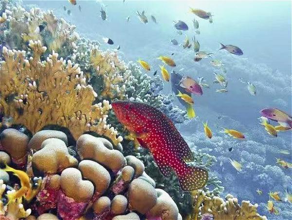 图四:MSC地中海邮轮在私属岛屿海洋礁自然保护区通过修复珊瑚改善海洋生态_meitu_3.jpg