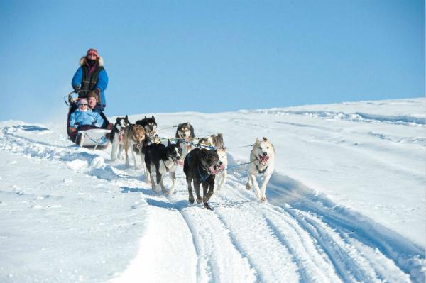 阿拉斯加艾迪塔羅德狗拉雪橇大賽即將在3月拉開帷幕2_meitu_1.jpg