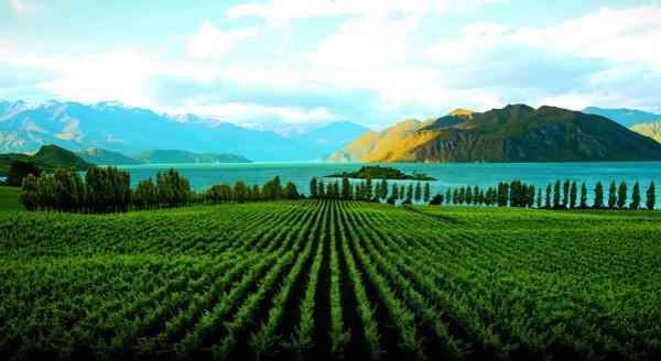 NZ2_meitu_1.jpg