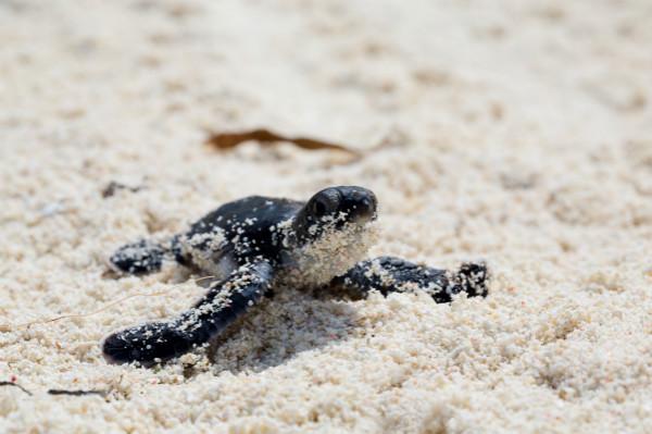 Turtle_Hatchling_meitu_1.jpg