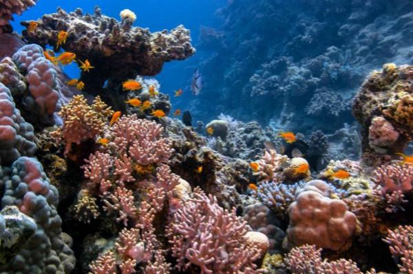 图1:MSC地中海基金会和Ba'a基金会将合作推进珊瑚礁保护工作_meitu_1.jpg