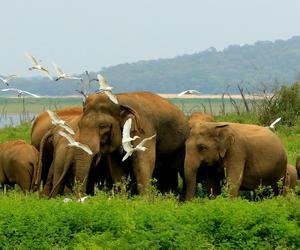 斯里蘭卡旅游新宣傳片視角獨特 讓人們跟隨奇妙的野生動物去旅行