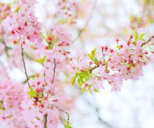 """又到一年江城赏樱季!武汉万达瑞华酒店推出""""花见之约"""""""